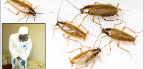 Details over de behandeling van gebouwen van verschillende insecten: belangrijke nuances