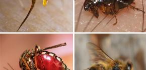 EHBO-regels voor insectenbeten: wat eerst te doen