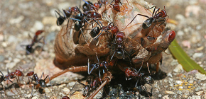 Welke mieren eten