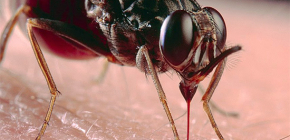 Over insectenbeten en hun behandeling