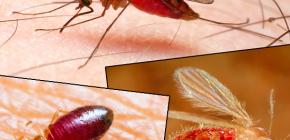 Beten van verschillende soorten insecten en hun foto's