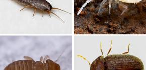 Welke kleine insecten zijn er te vinden in het appartement