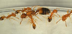 Waar komen mieren vandaan in huis en moet je bang voor ze zijn