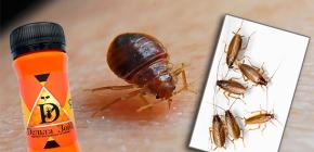Remedie voor bedwantsen en kakkerlakken Delta Zone: beschrijving en beoordelingen