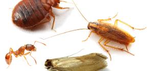 Hoe huis insecten te bestrijden in het appartement