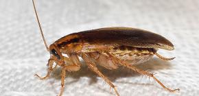Uitzoeken waar kakkerlakken zijn verdwenen en waarom ze verdwenen zijn