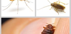 Insecticidale insectenwerende middelen in huis: een overzicht van medicijnen
