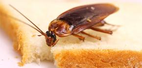 Hoe kom ik aan kakkerlakken in het appartement