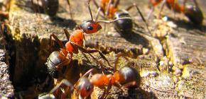 Hoe mieren zich voorbereiden op de winter
