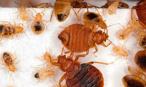 Methoden die helpen de insecten in het appartement volledig te vernietigen ...