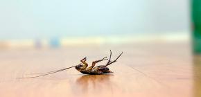 Een effectief gif voor kakkerlakken kiezen