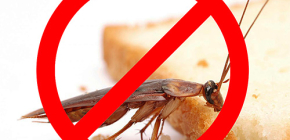 De vernietiging van insecten: nuttige tips en belangrijke nuances