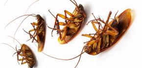 Percelen tegen kakkerlakken