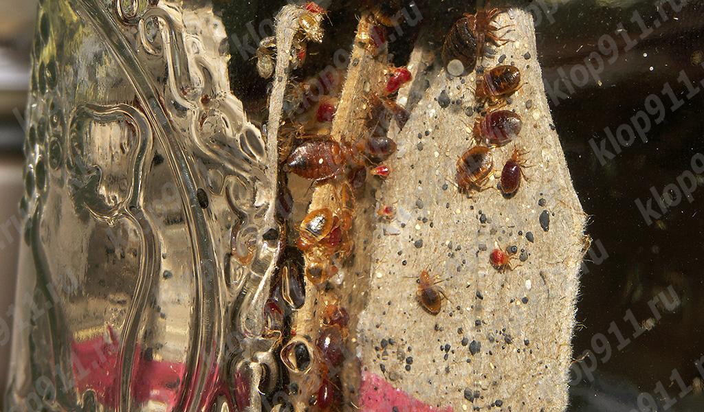 Individuen van verschillende leeftijden in het nest